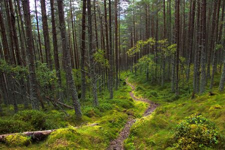 Forest in Ballater, Aberdeenshire, Scotland, UK. Cairngorms National Park. Stock Photo
