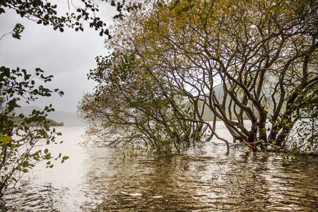 Trees in a lake. Loch Lomond and The Trossachs National Park in Scottish Highlands. Scotland, UK.