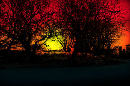 Halloween background. Sunset in the forest with flying bats.