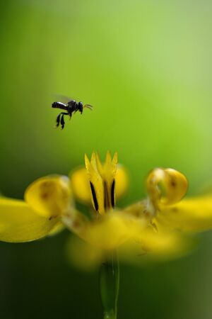 bee flying to flower Imagens