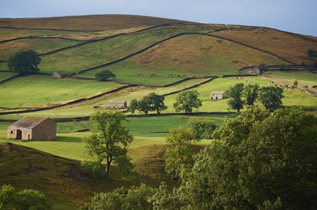 wharfedale: Fields form a pattern in the Yorkshire dales on an early summers evening
