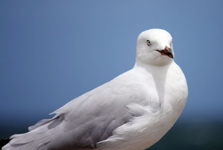 portrait of a lone seagull on a windy day. Stock Photo