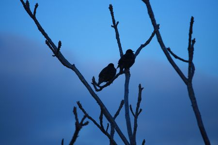 Two birds waiting at dawn for the sunrise