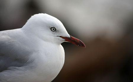 A profile of a lone sea gull