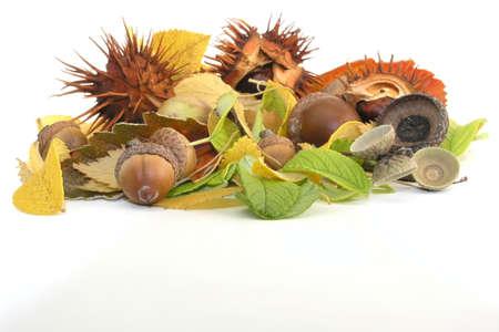 fall: acorn