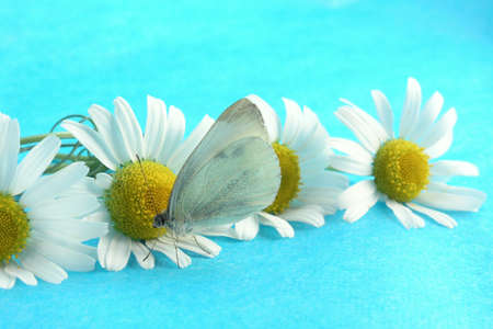 butterfly Stock Photo - 302256