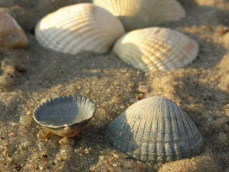 sand mold: shell
