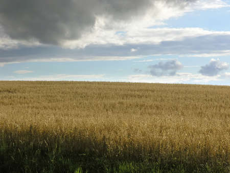 Field and sky photo