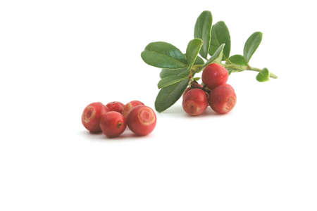 sause: cranberry Stock Photo
