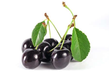 cherry branch: black cherry