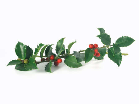 green holly  on white background (isolated) Stock Photo