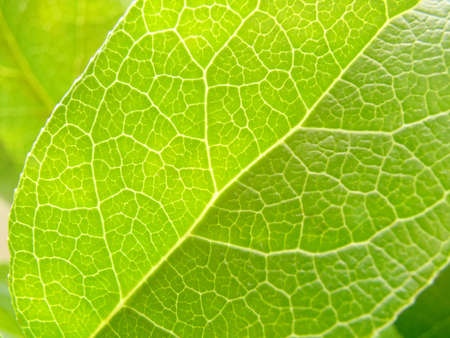 subdivisions: Green leaf