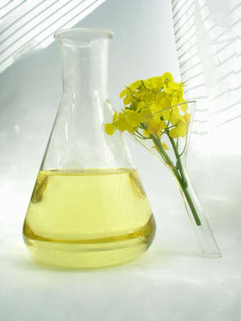 consistency:  flower & oil - rape