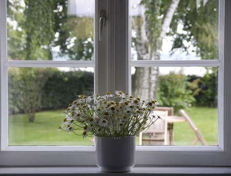white flowers in flowerpot at window - springtime