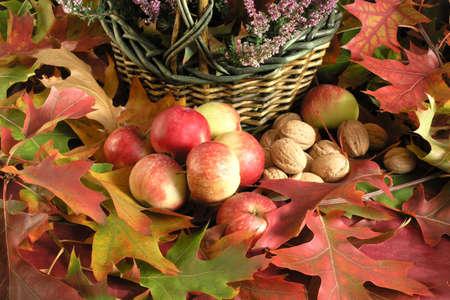 Autumn Cornucopia - colorful leaves  photo