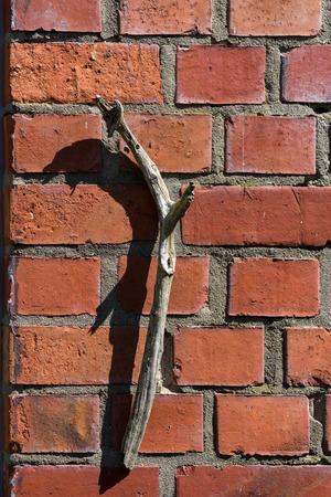 壁に木の棒 写真素材