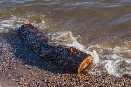 Wood on the beach