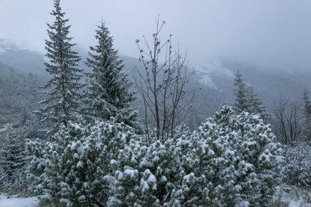 Winter mountain trail in the Tatra Mountains leading to Czerwone Wierchy