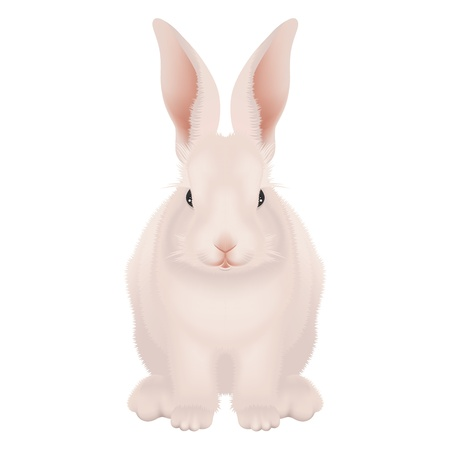 Happy Easter Bunny isolated - realistic detailed vector illustration on white background Illustration