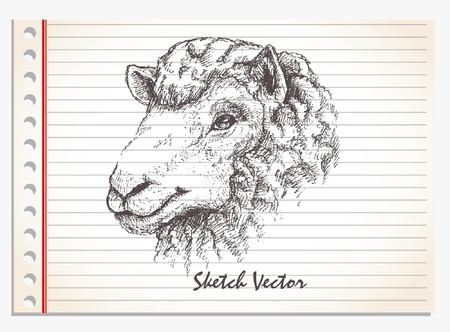 lamb head, hand drawn vector on paper isolated