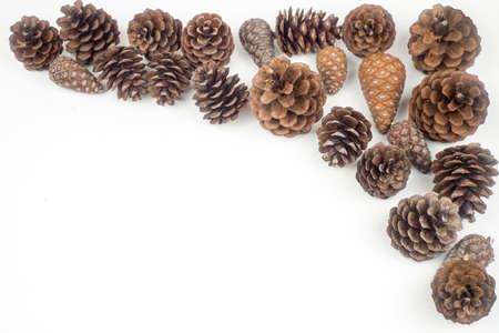 Decoration pine