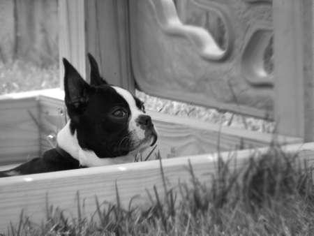 Dog Watching Reklamní fotografie