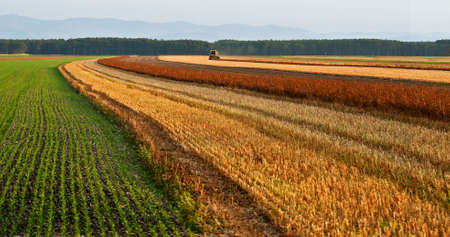 The agricultural machinery reaps an autumn crop. Austria photo