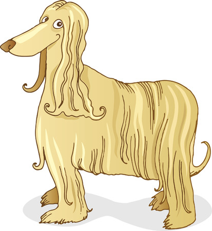 afghan hound dog Stock Vector - 5839961