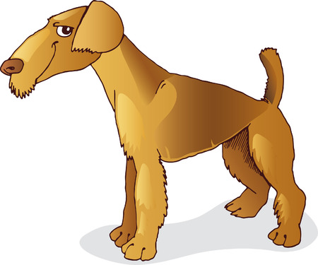 airedale terrier: airedale terrier dog