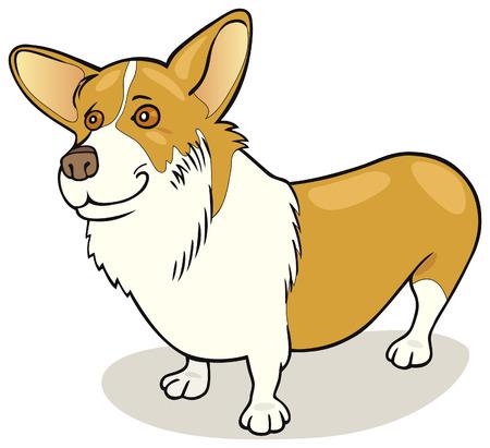 pembroke welsh corgi: Pembroke Welsh Corgi dog