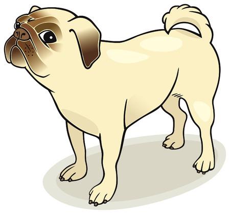 Dog breeds: Pug Stock Vector - 5839943