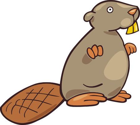 castor: cartoon beaver Illustration