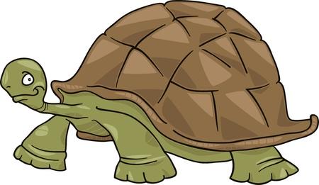 large turtle: big turtle
