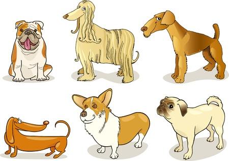 afghane: reinrassigen Hunde Illustration