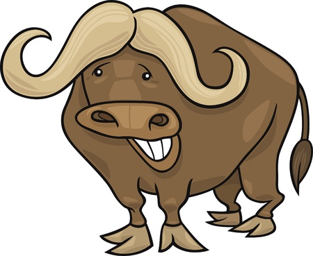 funny african buffalo