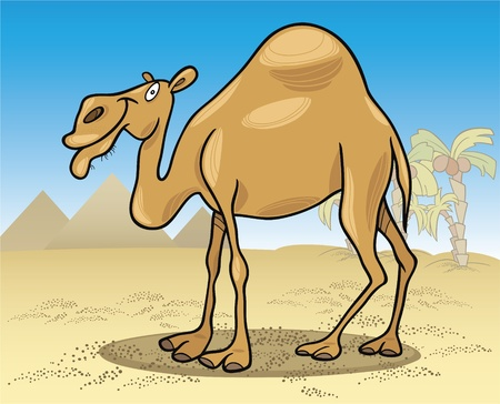 cartoon illustration of dromedary camel on desert Stock Vector - 9841627