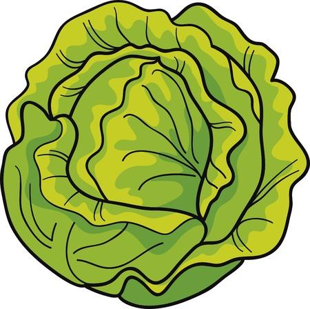 cabbage: Cartoon illustratie van groene kool