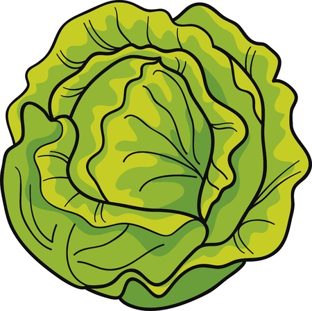 cartoon Illustration of green cabbage
