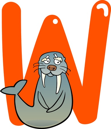 letter w: cartoon illustration of W letter for walrus