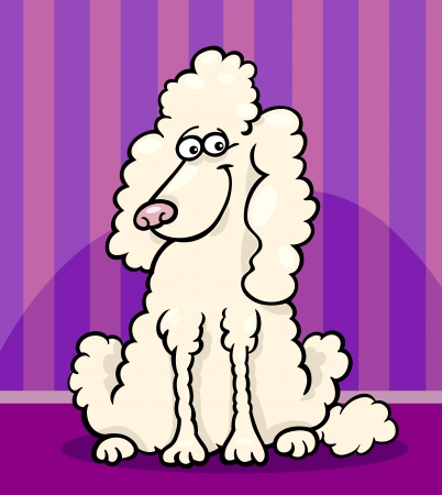 sit stay: Cartoon Illustration of Funny Purebred White Poodle against Wall at Home