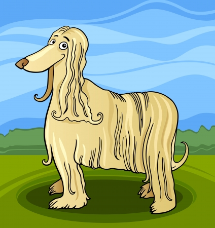 afghan: Cartoon Illustration of Funny Long Hair Afghan Hound Dog