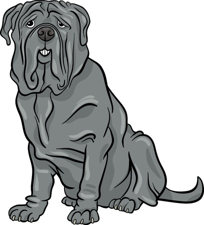 wrinkly: Cartoon Illustration of Cute Neapolitan Mastiff Purebred Dog