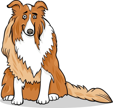 sheepdog: Cartoon Illustration of Funny Collie Purebred Dog