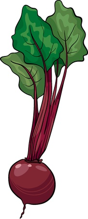 beet root: Cartoon Illustration of Beet Vegetable Food Object Illustration