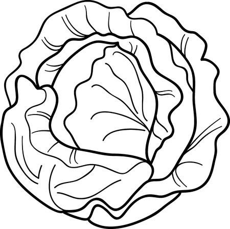 salad: Black and White Cartoon Illustration of Cabbage or Lettuce for Coloring Book Illustration