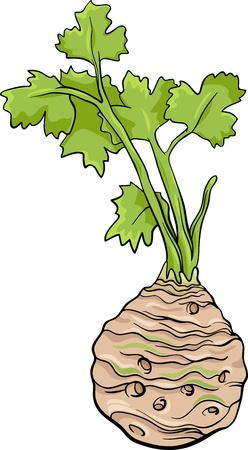 Cartoon Illustration of Celery Root Vegetable Food Object Vector