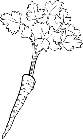 Black and White Cartoon Illustration of Parsley Root Vegetable Food Object for Coloring Book Vector