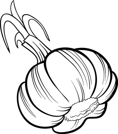 Black and White Cartoon Illustration of Garlic Head Vegetable Food Object for Coloring Book