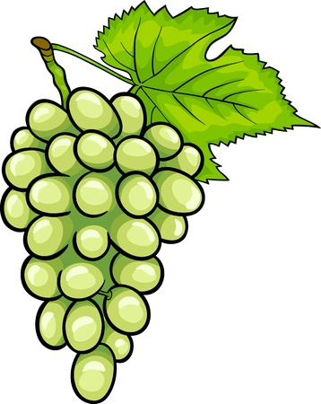 Cartoon Illustration of Bunch of White or Green Grapes or Grapevine Fruit Food Object Vector