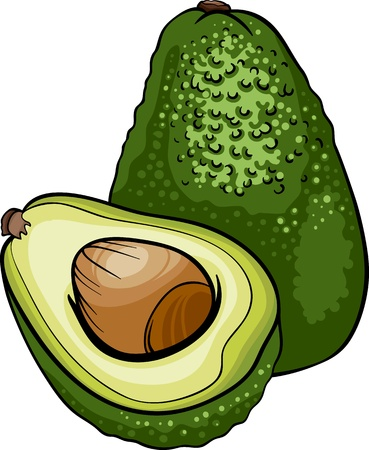 avocado: Cartoon Illustration of Avocado Fruit Food Object Illustration